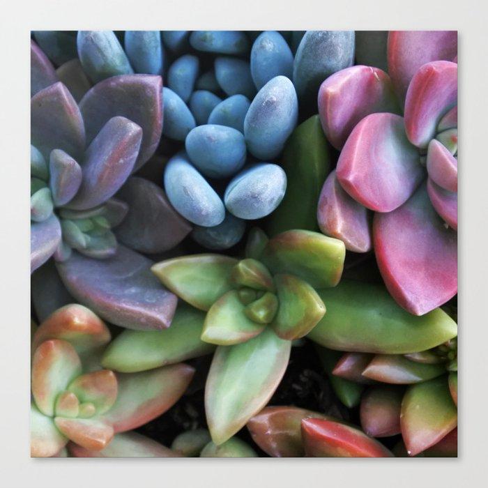 Colorful Succulents Canvas Print