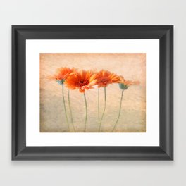 Orange Gerberas Framed Art Print