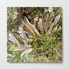 Grey-headed woodpecker feathers - Life goes on Metal Print