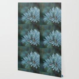 Blue spruce Wallpaper