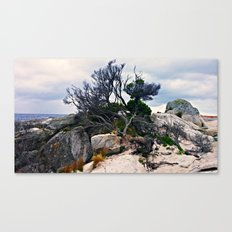 Tree in the Bay of Fires Canvas Print