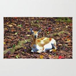 Gazelle Enjoying Autumn Rug