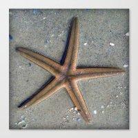 starfish Canvas Prints featuring Starfish by Nichole B.
