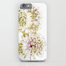 Astrantia major iPhone 6s Slim Case