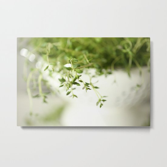 Fresh Herb In A White Pot Metal Print