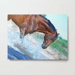 horse collection. Trakehner. swimm Metal Print