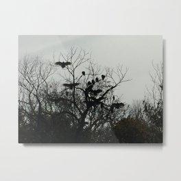 Buzzards 1 Metal Print