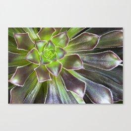 Flora Shoot Out! Canvas Print