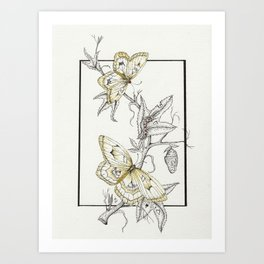 Life-Cycle Study: Butterfly Art Print