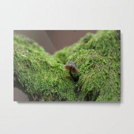 Forest Treasure Metal Print