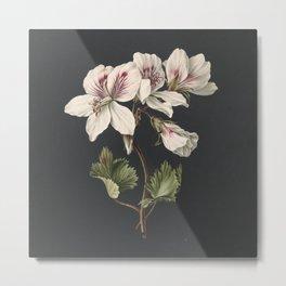 M. de Gijselaar - Pelargonium album bicolor (1830) Metal Print