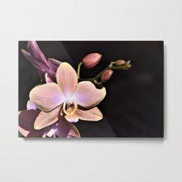 Dark Orchid Beauty Metal Print
