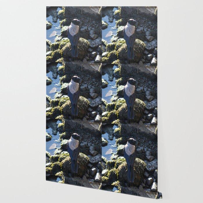 Dispute Wallpaper