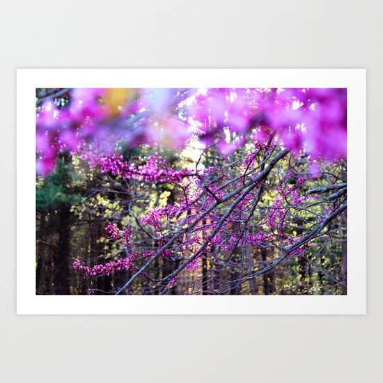 Fuchsia Dream Art Print