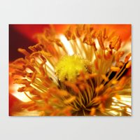 halo Canvas Prints featuring Halo by Monica Ortel ❖