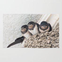 Swallow nestlings sitting in nest Rug