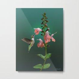 Tropical Sage And Hummingbird Metal Print