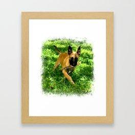 Junior Maligator Framed Art Print