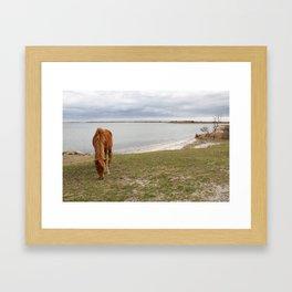 Assateague Framed Art Print