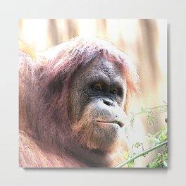 CArt Orangutan Metal Print