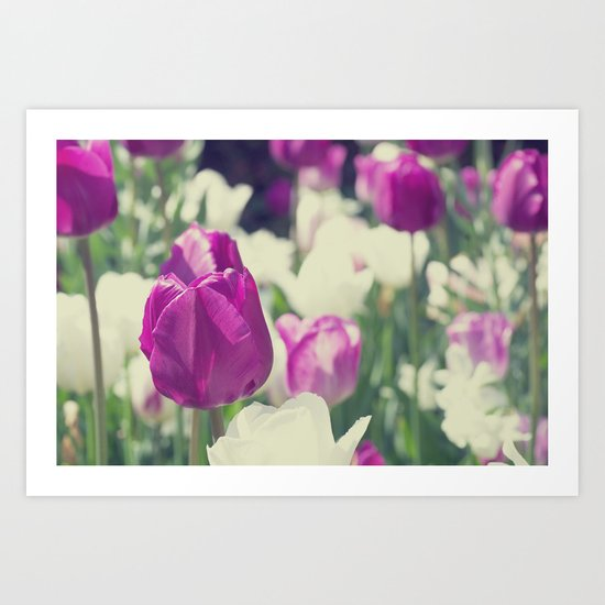 Violet white flowers greeting of tulips Art Print