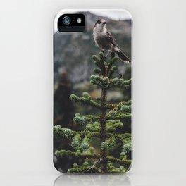 Bird on a Fir Tree iPhone Case