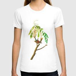 Chipping sparrow John James Audubon Vintage Scientific Bird illustration T-shirt