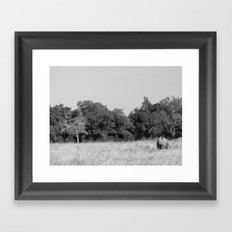 Black rhino in Maasai Mara Framed Art Print