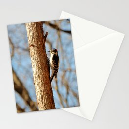 Downey Woodpecker Stationery Cards
