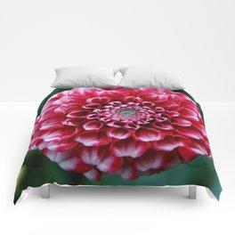 Dalia2 Comforters