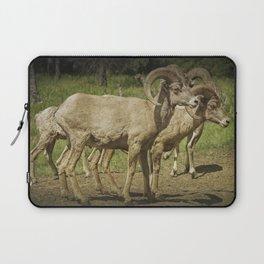 Bighorn Sheep along a Roadside in the Black Hills Laptop Sleeve