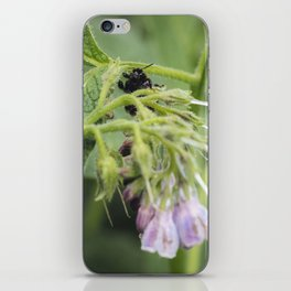 Bumble bee collecting pollen from a Russian Comfrey flower. iPhone Skin