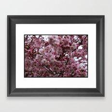 Blossoms in Bloomfield Framed Art Print