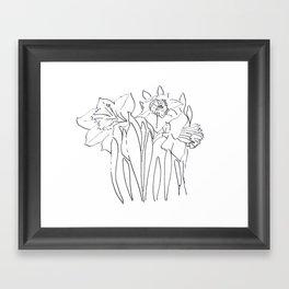 Daffodil Sketch Framed Art Print
