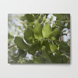 Light And Leaves Metal Print