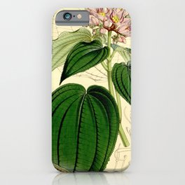 Amphiblemma cymosum 90 5473 iPhone Case