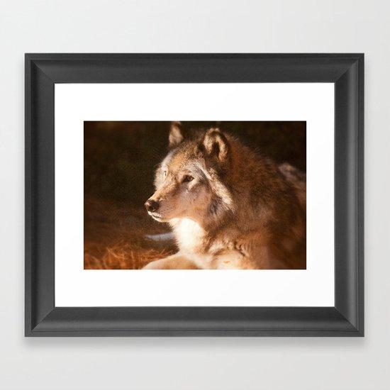 Wolf Beauty Framed Art Print