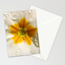 Primula Stationery Cards