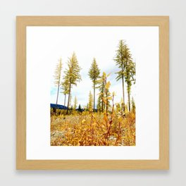 larch trees Framed Art Print