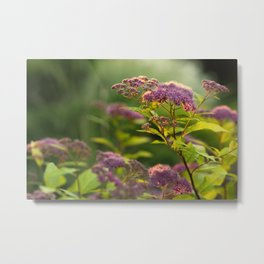 Blooming Spirea Metal Print