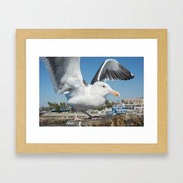 Seagull Mid-flight Framed Art Print