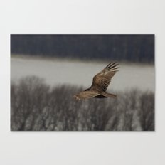 Vultures know the inventory of a flood Canvas Print