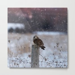 Short eared owl in falling snow Metal Print