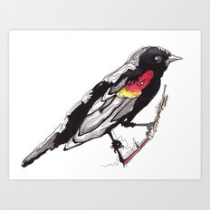 Red Winged Black Bird Art Print