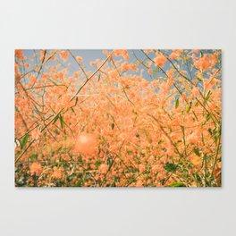 Super Bloom Of Flowers Canvas Print