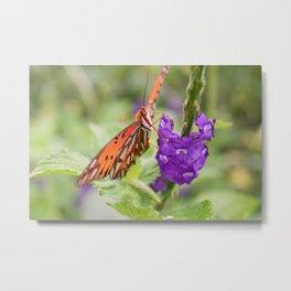 Butterfly in Ometepe, Nicaragua Metal Print