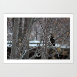 Hawk's Got an Eye on You Photo Art Print