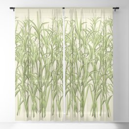 Sugar Cane Exotic Plant Pattern Sheer Curtain