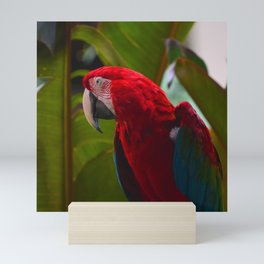Bright Red Macaw Parrot Photo Mini Art Print