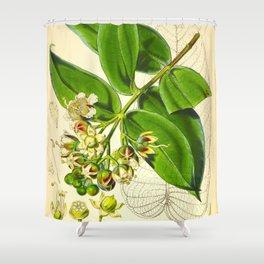 Vintage Illustration Botanical Scientific Illustration Himalayan Plants Shower Curtain